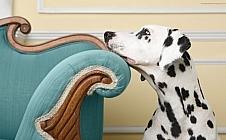 Honden 1