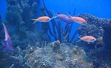 Zeeleven
